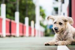 O cão triste do cão espera sua senhora fotografia de stock