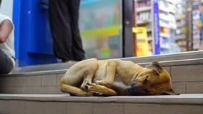 O cão vermelho dorme nas escadas perto da loja e puxa a pata video estoque