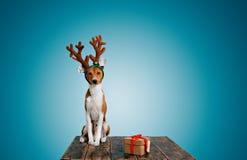 O cão vestiu-se acima como cervos do Natal com presente Imagem de Stock