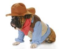 O cão vestiu-se acima como um cowboy imagens de stock
