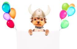 O cão vestiu-se acima como um viquingue com bandeira Fotos de Stock Royalty Free