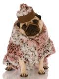 O cão vestiu-se no casaco de pele e no chapéu imagens de stock