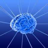 O cérebro Fotos de Stock Royalty Free