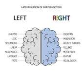 O cérebro esquerdo e direito funciona informação Fotos de Stock Royalty Free