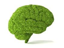 O cérebro humano é coberto com a grama verde ilustração stock
