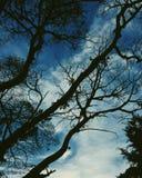 O céu é tão azul fotos de stock royalty free