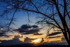 O céu ao por do sol e as sombras das árvores no fundo Fotos de Stock Royalty Free