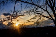 O céu ao por do sol e a silhueta das árvores no fundo Fotos de Stock