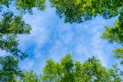 O céu através da folha, olha acima imagens de stock royalty free