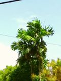 O céu azul na parte superior da flora Fotografia de Stock Royalty Free