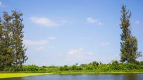 O céu azul nubla-se sobre o campo e a árvore verdes Timelapse vídeos de arquivo