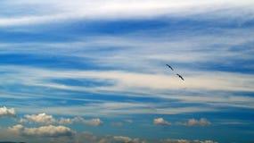 O céu azul pontilhou com nuvens brancas, e dois corvos em voo Imagem de Stock Royalty Free