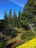 O céu claro bonito acima do jardim Fotos de Stock Royalty Free