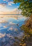 O céu colorido refletiu na água da lagoa dos manguezais Fotos de Stock Royalty Free