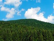 O céu de madeira dos abeto nubla-se o fundo do panorama foto de stock