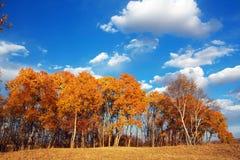 O céu do outono Foto de Stock