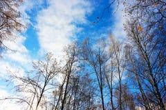 O céu do outono nas árvores Imagens de Stock Royalty Free