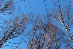 O céu olha acima com árvores Fotos de Stock Royalty Free