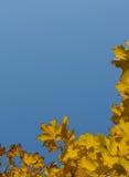 O céu outonal azul no amarelo sae do quadro Fotos de Stock