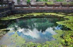O céu refletiu em uma lagoa coberto de vegetação com a grama Fotos de Stock