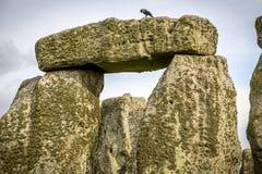 O círculo em Stonehenge Imagem de Stock
