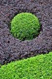 O círculo verde deu forma por Arbusto do roxo e do verde Imagem de Stock