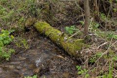 O córrego da montanha, o rio corre através das árvores caídas Imagem de Stock