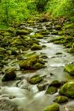 O córrego de fluxo da montanha com musgo cobriu rochas Fotos de Stock Royalty Free