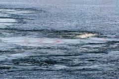 O córrego no mar Imagens de Stock
