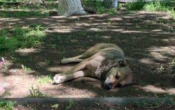 o c?o caiu adormecido no freio, um dia quente para c?es que ? hora de descansar animais selvagens dos animais fotografia de stock