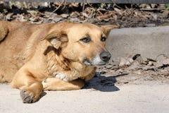O c?o ? uma cadela triste do c?o fotos de stock