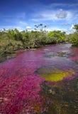 O Caño Cristales, um dos rios os mais bonitos no mundo Foto de Stock Royalty Free