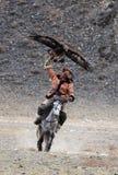 O caçador desconhecido com Eagle dourado mostra sua experiência na falcoaria Foto de Stock