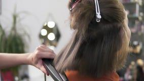 O cabeleireiro endireita o cabelo da mulher de assento com um ferro do cabelo no estúdio da beleza Guarda o dispositivo especial  filme