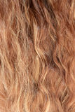 O cabelo da mulher Fotografia de Stock Royalty Free