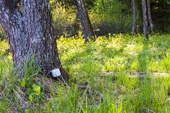 O cabo conectou o soquete bonde que pendura no tronco de árvore na floresta fotos de stock royalty free