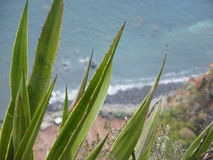O cabo de Girão, ilha de Madeira, Portugal, ao sul de Europa Fotografia de Stock