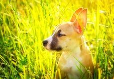O cachorrinho Imagem de Stock Royalty Free