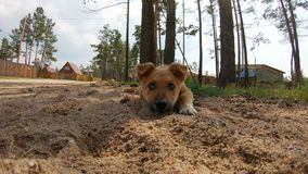 O cachorrinho bonito é encontrando-se e triste filme