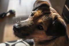 O cachorrinho bonito escuta o commandword imagens de stock royalty free