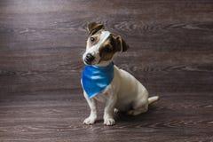 O cachorrinho bonito está olhando fixamente com curiosidade fotos de stock