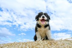 O cachorrinho bonito está sentando-se no pacote de feno Fotografia de Stock Royalty Free