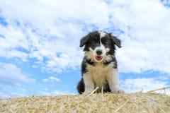 O cachorrinho bonito está sentando-se no pacote de feno Imagem de Stock