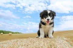 O cachorrinho bonito está sentando-se no pacote de feno Imagem de Stock Royalty Free
