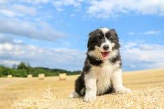 O cachorrinho bonito está sentando-se no pacote de feno Foto de Stock Royalty Free