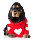 O cachorrinho do Valentim Fotografia de Stock