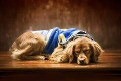 O cachorrinho está dormindo no inverno do sol muito bonito e bonito fotos de stock