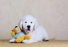 O cachorrinho feliz bonito é um brinquedo macio Jogos do perdigueiro fotos de stock