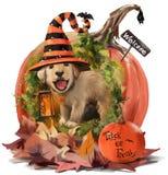 O cachorrinho na casa feita da abóbora Imagens de Stock