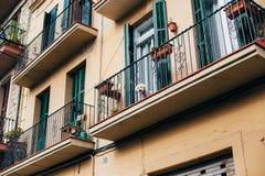 O cachorrinho pequeno bonito olha fora do balcão Imagem de Stock Royalty Free